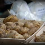 Bonnotte de Noirmoutier