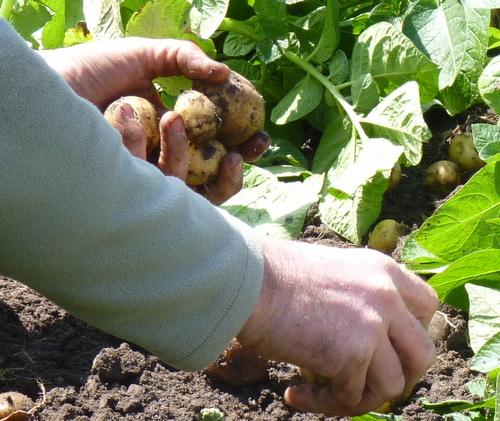 producteurs en Vendée