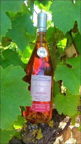 Rosé Domaine la Cambaudière à Rosnay