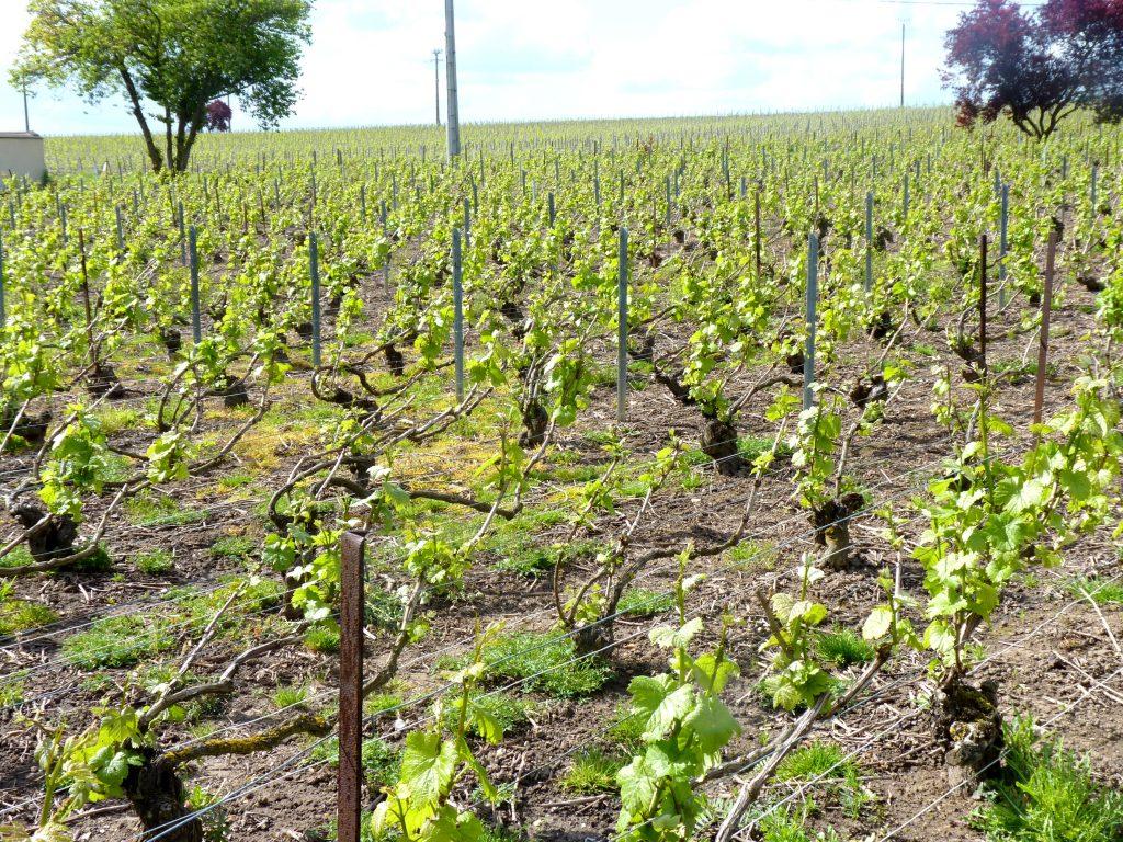 Champagne Veillard-Millot Ambonnay