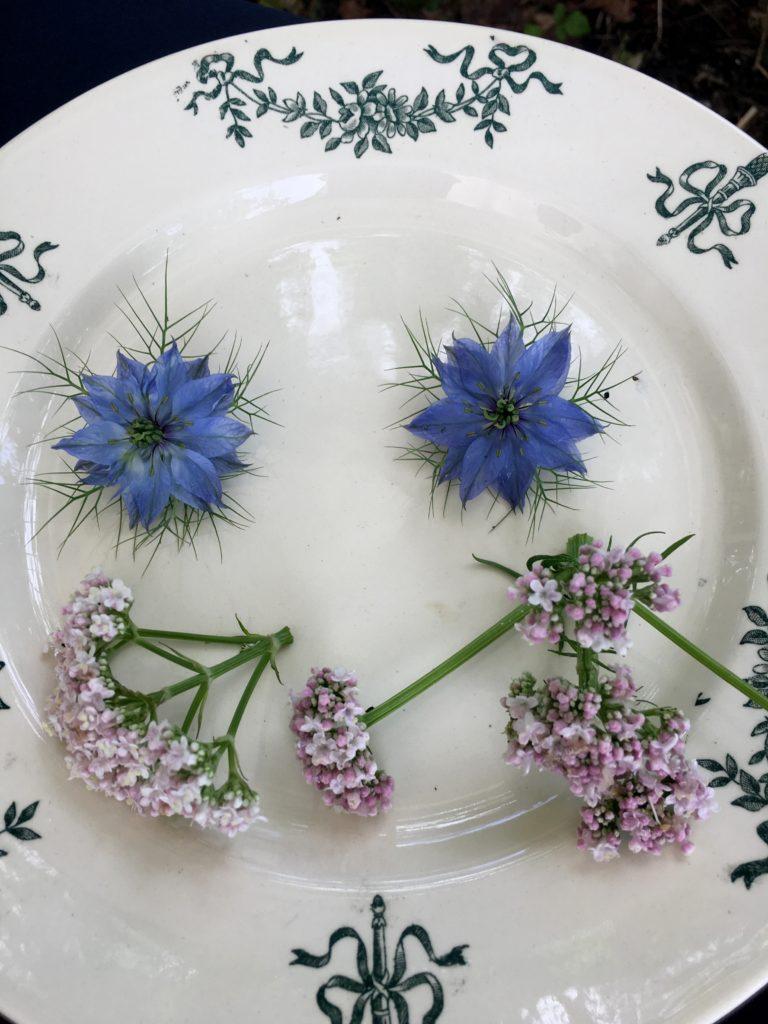 fleurs de bleuets et valériane