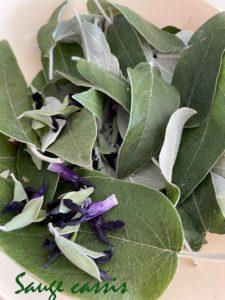 sauge cassis pour gelée de fleurs comestibles