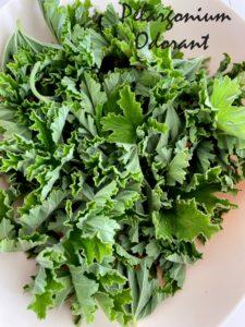 pélargonium odorant pour gelée de fleurs comestibles